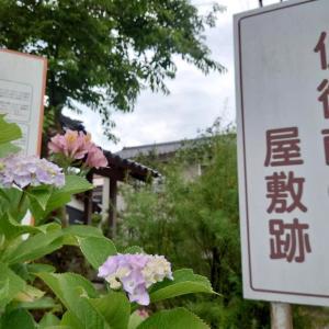 仏御前の墓に紫陽花が咲く