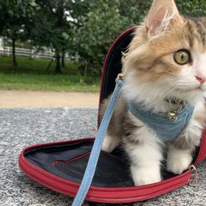 緑の多い公園で子猫がお散歩をしました♪木に抱きついて可愛い【ミヌエットの子猫もなか】