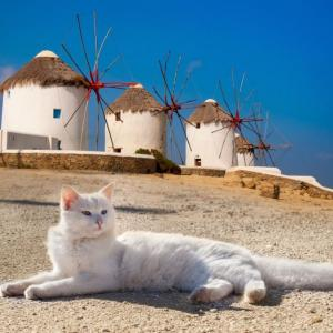 風車が特徴的なエーゲ海に浮かぶ美しい猫島、ギリシャ・ミコノス島