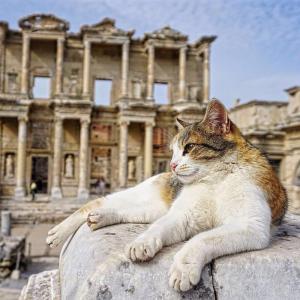必ず好みの猫が見つかる!トルコ・エフェソス遺跡に住む150匹の遺跡猫たち