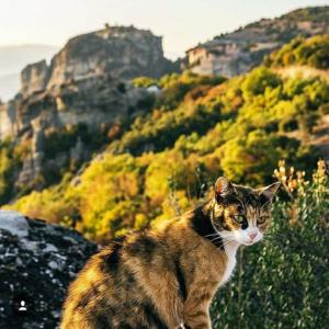 野良猫が山中をガイドしてくれる「カランバカのメテオラ修道院」へトレッキング