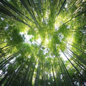 林業の会社の「ガチャガチャ」