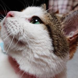 猫壁チャレンジとストロベリームーン