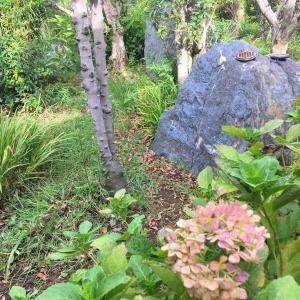 庭の風景1