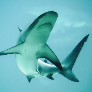サメの被害に遭わない為に出来る事