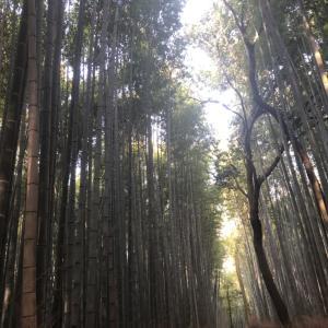 GO to で嵐山に行ってみた ~食べ歩きと竹林に癒やされるの巻~