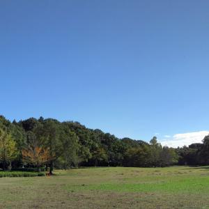 松戸市「21世紀の森と広場」:秋の里山そんな感じも味わえます