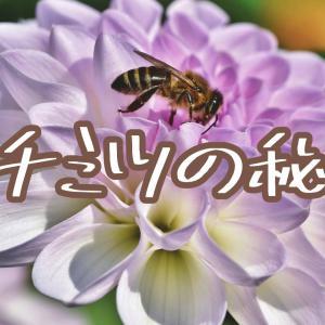 ハチミツの秘密