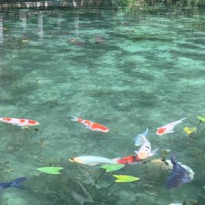 モネの池とセントレアへの釣り