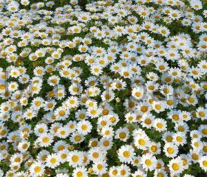 上の子とほのぼの公園デート。花を観賞しながらまったりとした一日?