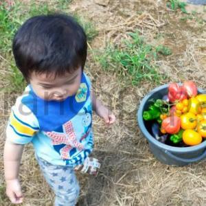 夏休みは田舎でのんびり。じいちゃんの畑で自家栽培した野菜を熱く見つめる我が子