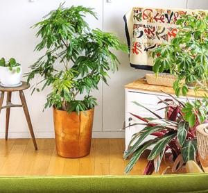 植木鉢の周りを掃除しやすく。『カグスベール』をつけてみた | ROOMHOLIC|神奈川の整理収納アドバイザー藤井ともみ