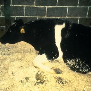 大人の科学(10) 牛肉は本当に安全か? 狂牛病(BSE)の謎
