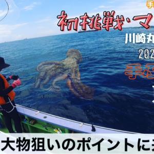 千葉・富津 マダコ船 by.川崎丸