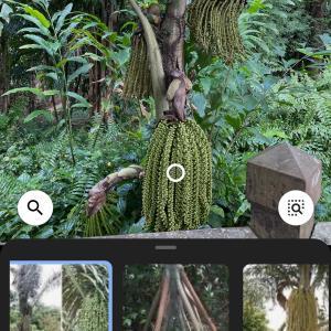 知らない植物の名前を知るためには?
