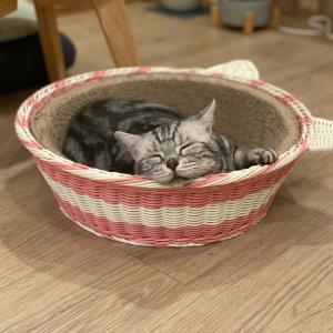 癒しの猫カフェ @ Meomi Cat Cafe