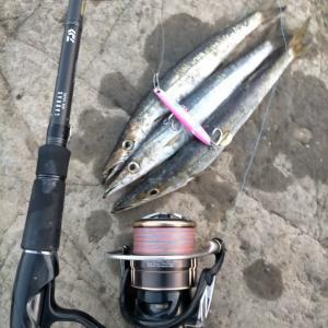 【三浦半島】今年2回目カマス数釣りからのワラサ