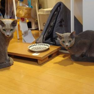 猫たちのご飯保管について