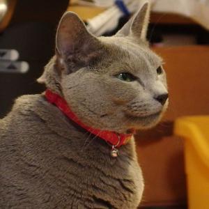 まね子猫ポーズのビーンちゃん