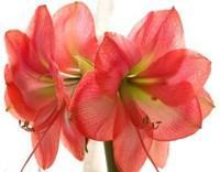 本日の誕生花
