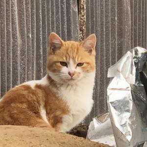 近隣野良猫問題