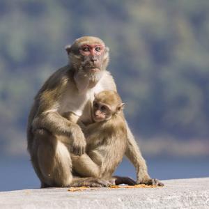 猿に人間の知能遺伝子を移すー―いつかしっぺ返しが・・・
