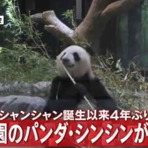 上野動物園でジャイアントパンダのシンシンが双子を出産