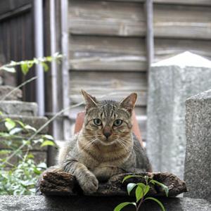対象キジネコさん