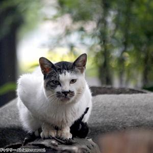 小さな神社の爺さん?ネコ