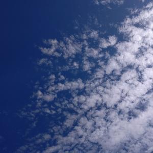 うろこ雲とホシノ天然酵母パン。