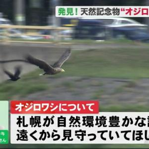 市街地の川で、2mの鳥!