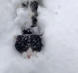 深雪をグングン進む猫がカワイイ!