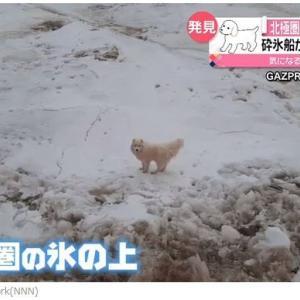 北極圏の氷上・迷い犬救われる!