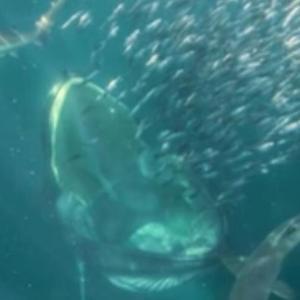 クジラに飲み込まれて生還した男