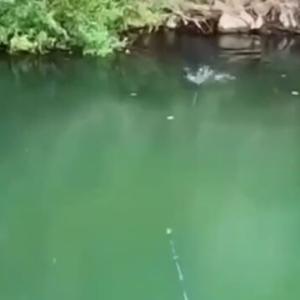 何か分からない大きな生物が釣れた!