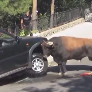 猛牛のパワーどんなもんか分かる動画