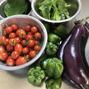 夏野菜、収穫祭