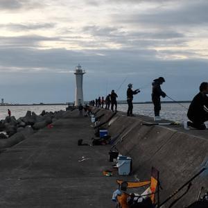 和田防の新波止でメジロ祭り
