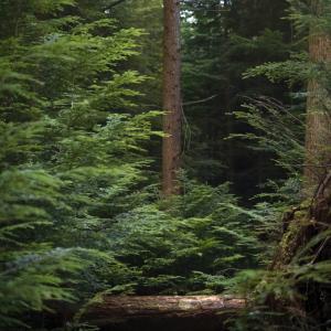 次の世界自然遺産候補は?九州地方のおすすめ世界遺産スポットを紹介