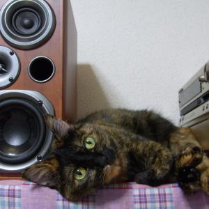 愛猫の悩ましい咳発作 No.5