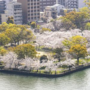 帝国ホテル大阪から見る桜ノ宮の満開の桜