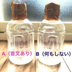 ★☆一ヶ月観察・音叉の効果実験 23日目☆★