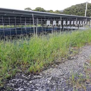 草刈り & 植生シート敷き