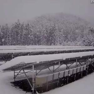 積雪地域、今年は駄目ですね~(T_T) 三重県平野部と比較してみました。