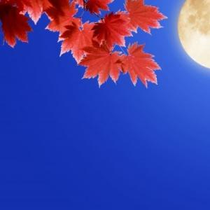 Herbstkleider, und bald wird der Herbst in vollem Gange sein!
