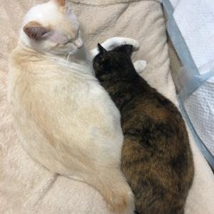 Liebe & Liebe Haku und Momo sind Liebende