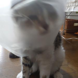 お気に入りは猫鍋の・・・