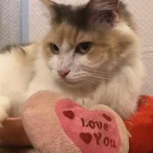 ¡Los perros y los gatos son como ángeles que calman el corazón de las personas y las hacen sentir bien!