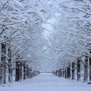 Зимняя соната... теперь, когда этот шедевр возвращается к жизни.