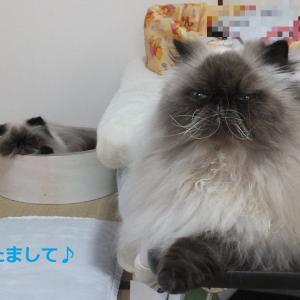 お正月休みや!@帰阪 パワースポットで充電 4日目